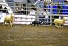 LI3_3264_StockDogs_Final_2012