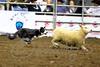 LI3_3259_StockDogs_Final_2012