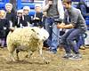 LI3_3232_Wild_Wool_Ride2012