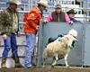 LI3_2712_Wild_Wool_Ride2012