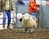 LI3_2697_Wild_Wool_Ride2012