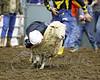 LI3_2698_Wild_Wool_Ride2012