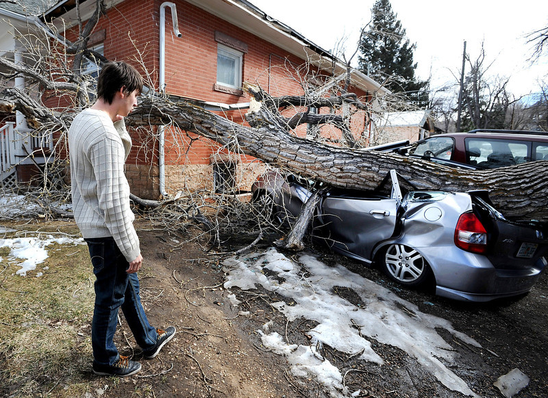 "Car Crushed by Tree56.JPG Greg Rossin was called by roommates to come home to see his ""totaled"" car. High winds blew over this tree at 802 University.<br /> For a video of Rossin, go to  <a href=""http://www.dailycamera.com"">http://www.dailycamera.com</a>.<br /> Cliff Grassmick / February 22, 2012"