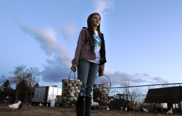 "be0122chicken16.jpg Shelby Grebenc, 12, carries about 13 dozen eggs gathered from 130 chickens for her business ""Shelby's Happy Chapped Chicken Butt Farm"" at the family home of 4 acres in Broomfield on Thursday. Grebenc is the youngest person to be certified as an Animal Welfare Approved chicken farm.<br /> For more photos please see  <a href=""http://www.broomfieldenterprise.com"">http://www.broomfieldenterprise.com</a><br /> January 19, 2012<br /> staff photo/ David R. Jennings"