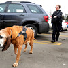 "Cathy Bryarly, of the Boulder County Sheriff's Office, walks ""Sally"" the bloodhound around the parking to sniff for clues while investigating a bank robbery on Wednesday, Feb. 15, at the Chase Bank at 603 S. Broadway in Boulder. For a video of the scene go to  <a href=""http://www.dailycamera.com"">http://www.dailycamera.com</a><br /> Jeremy Papasso/ Camera"