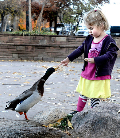 Noe Allen, 2, feeds a cracker to a duck near the Boulder Creek next to the Boulder Public Library while enjoying the nice weather on Tuesday, Nov. 6, in Boulder.<br /> Jeremy Papasso/ Camera