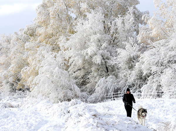 Wendy Redal walks her Alaskan Malamute, Chilkoot, on the Dry Creek Trail enjoying the new snow in Boulder, Colorado October 25, 2012. DAILY CAMERA/ MARK LEFFINGWELL