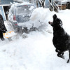 SNOW1.jpg Art Allen throws snow for his dog Willie as he clears his Boulder, Colorado driveway after a winter snowstorm.<br /> Photo by Paul Aiken / The Camera / February 3, 2012