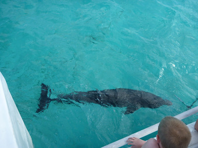 A dolphin in Grand Cayman, Cayman Islands.