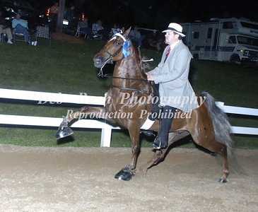 CLASS 20  WALKING PONY SPECIALTY ADULT