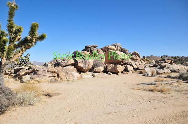 Eastern Mojave D4