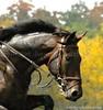 Unknown Rider 4