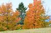 DSC_0019 Oct 2 2012