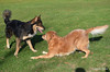 DSC_1531 Scooter Shayla Oct 24 2012
