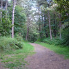 Evening of arrival, we walked through these woods (it was darker),