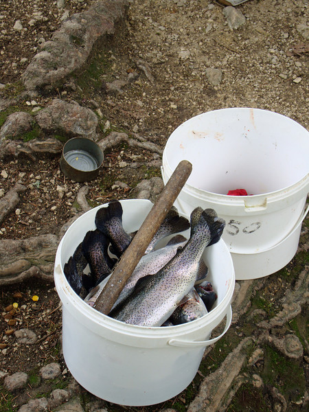 The big group near us took 15 trout for their barbecue.