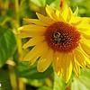 Cape Tourmentine Flowers 02