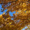 Moncton Centennial Park 06