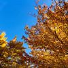 Moncton Centennial Park 05