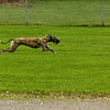 Greyhound 08