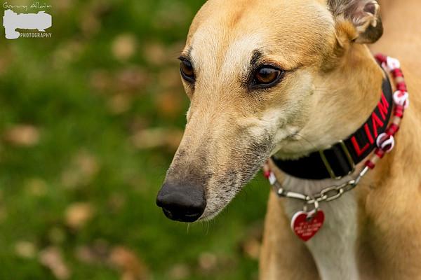 Greyhounds Riverview NB