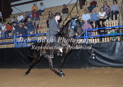 CLASS 4 -  3 YR OLD OPEN