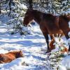2 sleepy foals