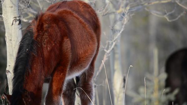 11 2012 Nov 26 Wild Horses First Videos