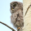 this is the 3rd owlet