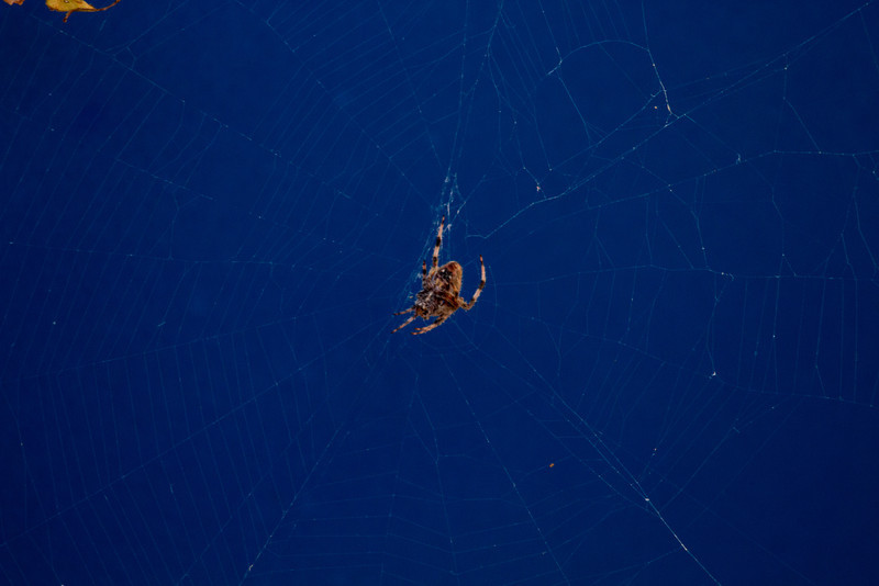 Day 242 - 29 August 2012<br /> A spider weaves his web on my truck.