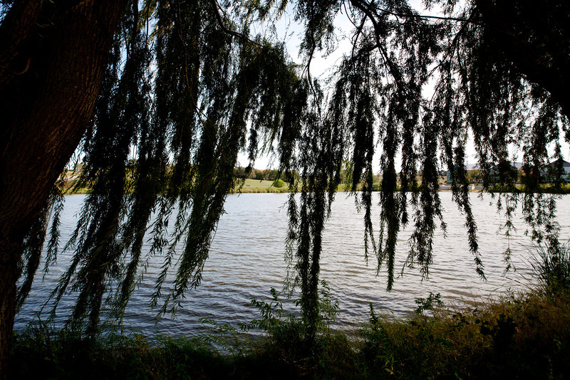 Day 235 - 22 August 2012<br /> A nice evening to sit under the weeping willow tree and look out over the lake.
