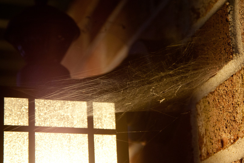 Day 249 - 6 September 2012<br /> Interesting lighting on this spiderweb.