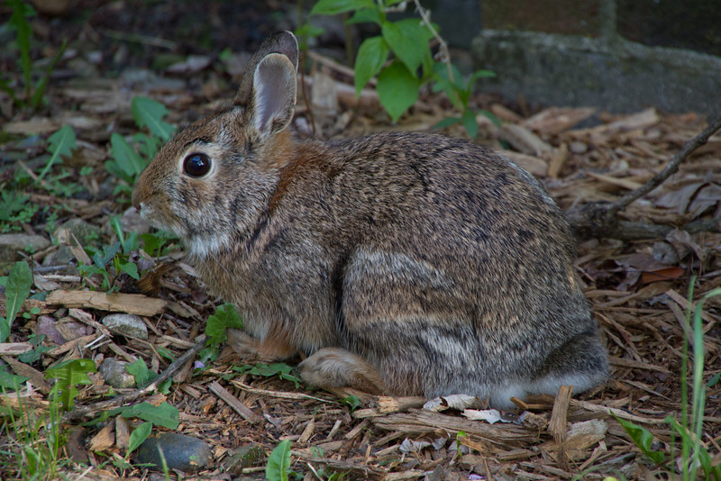 Day 93 - 2 April 2012<br /> Look who I found in my yard this evening.  Hopefully he'll be back for Easter.
