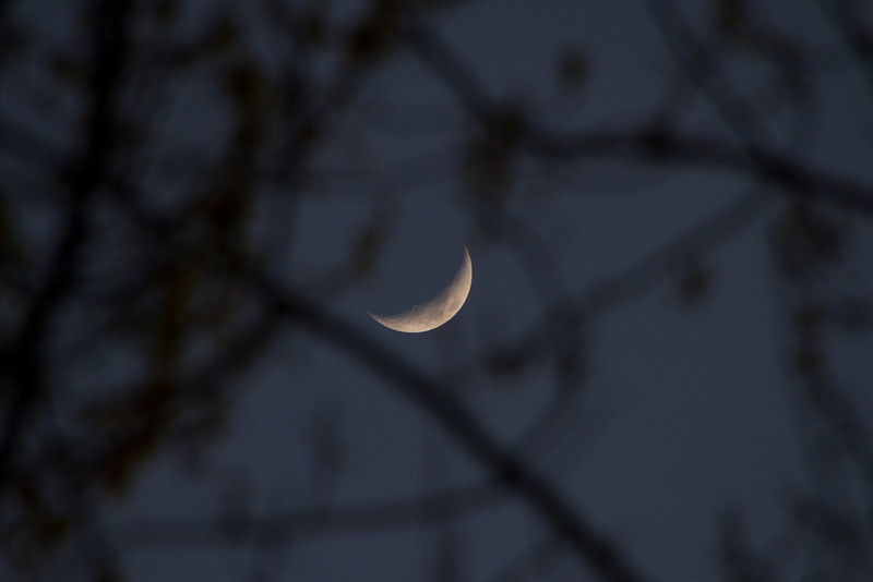 Day 87 - 27 March 2012<br /> Thought this was a interesting view of the moon through the trees.