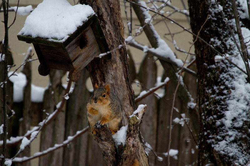 Day 36 - 5 February 2012<br /> It appeared that this squirrel was protecting something that it had in it's paw.