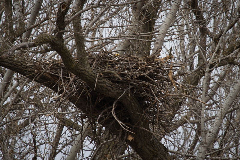 Day 62 - 2 March 2012<br /> Going to be interesting to watch this eagle's nest over the next few weeks.  This nest is located on the Raccoon River near downtown Des Moines.