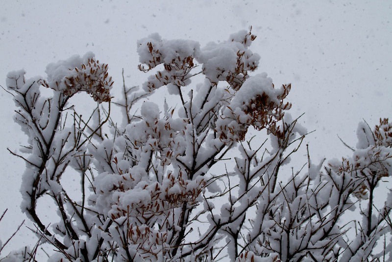 Day 35 - 4 February 2012<br /> Let it Snow!<br /> The first real snow that we have had this winter.  A wet heavy snow.