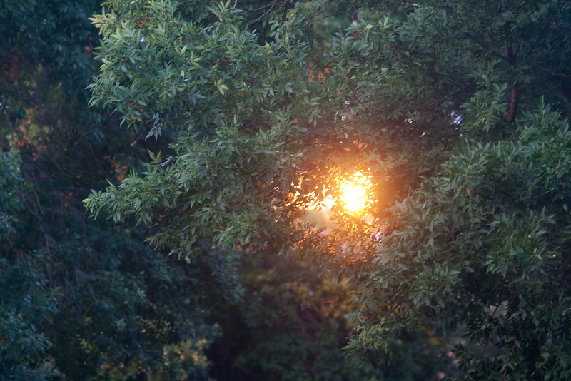 Day 231- 18 August 2012<br /> Is it the sun setting through the trees, not really, its the setting sun reflecting off of an office building back through the trees.