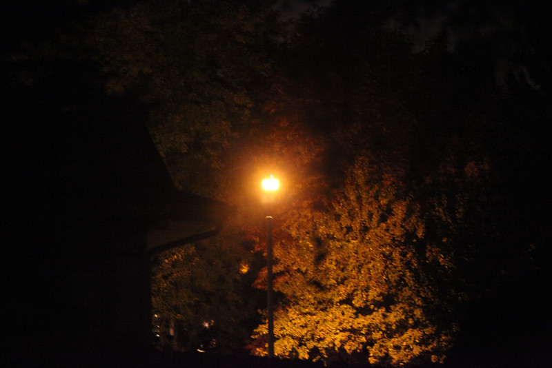 Day 275 - 2 October 2012<br /> Thought the color of the streetlight made the leaves more interesting.