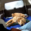 K-9s Maggie and Hannah resting up on the long trip to Newtown, Connecticut.