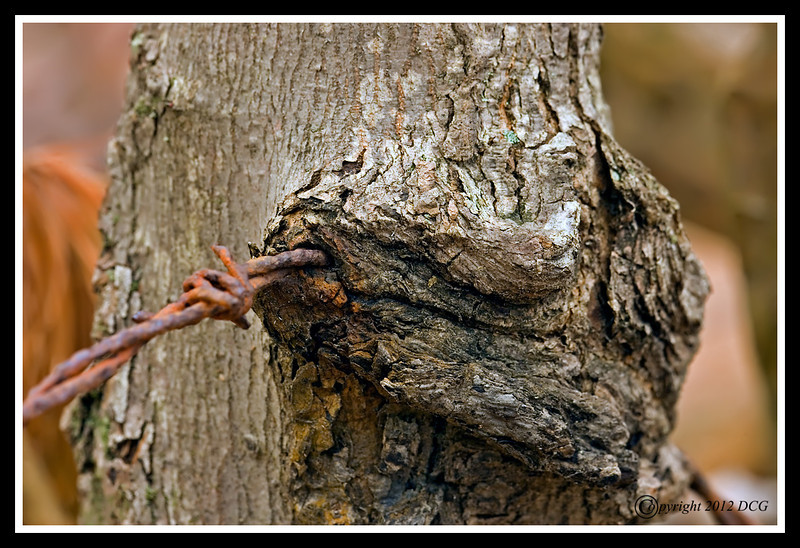Barbed Wire-02-29-05cr