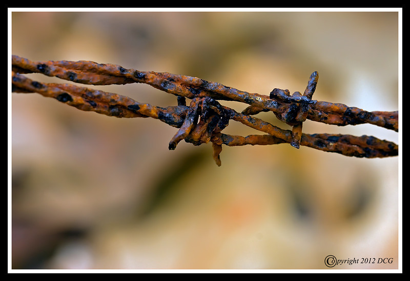 Barbed Wire-02-29-04cr