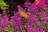 Butterfly-08-02-01