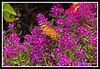 Butterfly-08-02-01cr