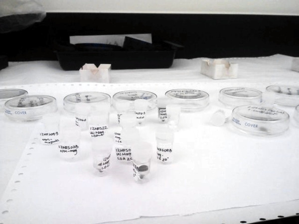 Samples ready to look under the microscope!
