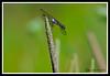 Dragonfly-07-15-02cr