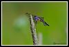 Dragonfly-07-15-01acr
