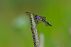 Dragonfly-07-15-01a