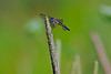 Dragonfly-07-15-01
