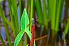 Dragonfly-08-16-01